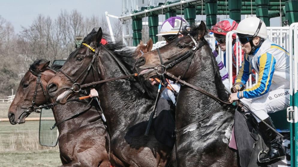 Как получать доход с конного спорта